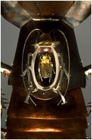 American Cockroach by Elizabeth Goluch